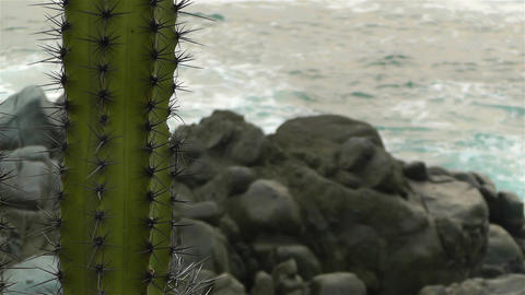 Cactus in the Beach 4 Stock Video Footage