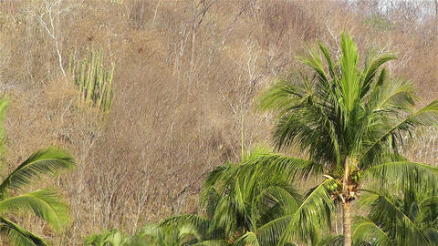 End of the Dry Season in South Mexico Stock Video Footage