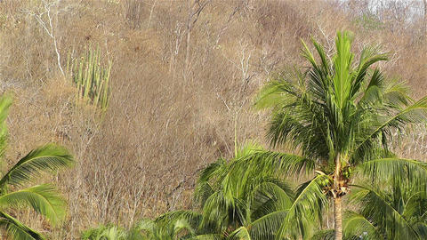 End Of The Dry Season In South Mexico stock footage