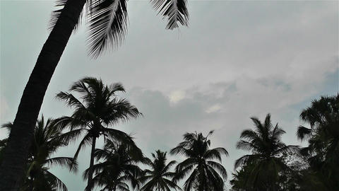 Palm Trees 2 1 Stock Video Footage