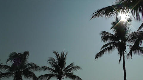 Palm Trees Lowangle against Sun 2 Stock Video Footage