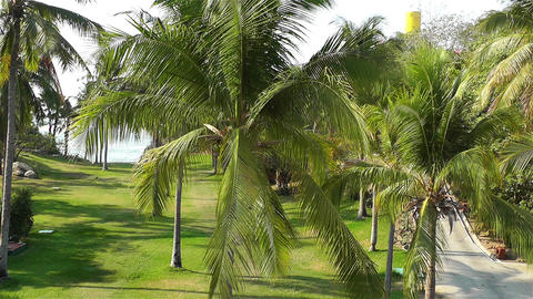 Tropical Paradise in Mexico 26 palm trees Stock Video Footage