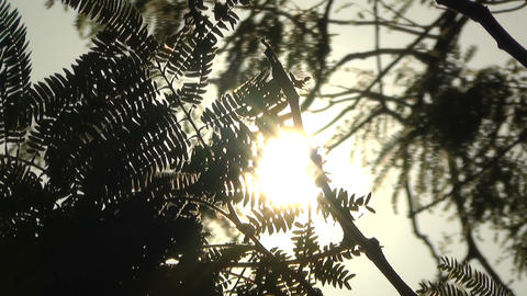 Tropical Plants Silhouette against Sun 1 Stock Video Footage