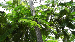 Tropical Tree 1 Stock Video Footage