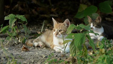 公園の中の子猫 stock footage