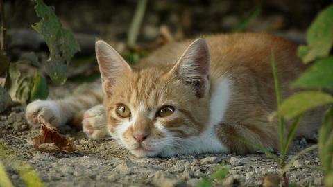 公園の中の子猫 Footage