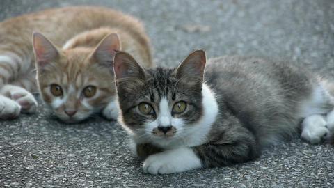 公園の中の子猫 Stock Video Footage