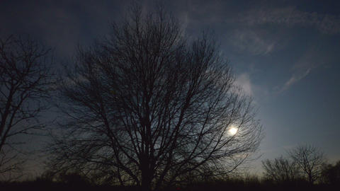 moon rise behind tree 10892 Footage