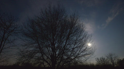 moon rise behind tree 10892 Stock Video Footage