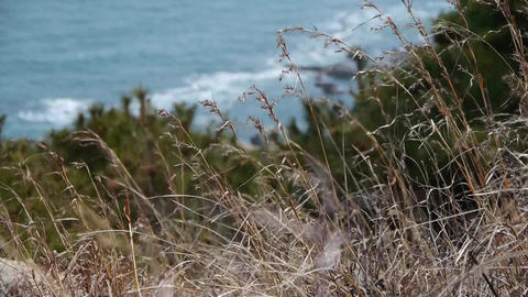 swing wild grass in wind,blur seascape backgrounds Stock Video Footage