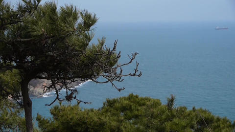 swing pine in wind,seascape backgrounds Stock Video Footage