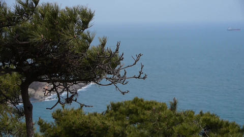 swing pine in wind,seascape backgrounds Stock Video Footage
