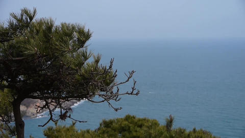 swing pine in wind,seascape backgrounds Footage