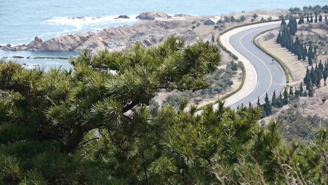 swing pine in wind,bicycle sport on seaside road Stock Video Footage