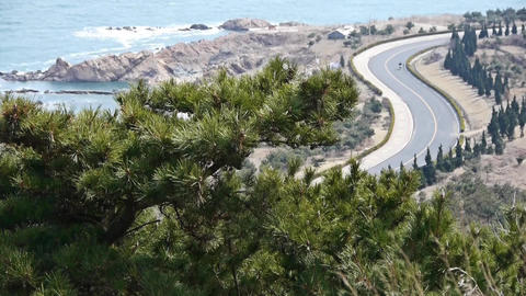 swing pine in wind,bicycle sport on seaside road Footage