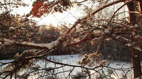 Walking in the woods, Steadicam shot Stock Video Footage
