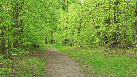 Dolly shoot of beautiful green woods at sunny day. Spring or summer landscape Live Action