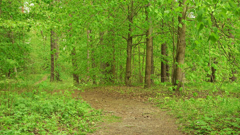 Country road via beautiful green woods. Spring or summer landscape Live Action