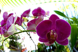 Orchids at the Flower Market in Hong Kong フォト