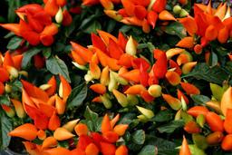 flowers Foto