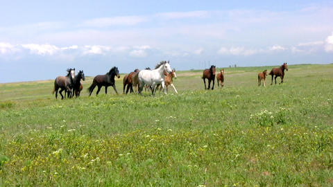 Herd and steppe Stock Video Footage
