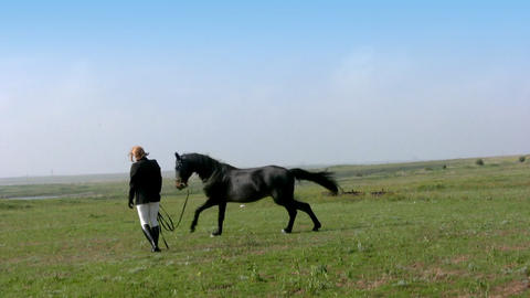 Training a horse Stock Video Footage