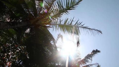 Sunlight Footage