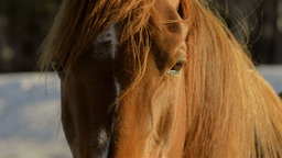Close-up of the Eyes of a Horse Stock Video Footage