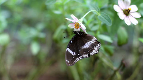 Butterfly Hanging and Fly Away Stock Video Footage