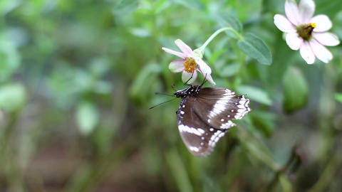 Butterfly Hanging And Fly Away stock footage