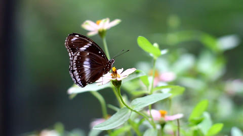 Butterfly Resting On Pink Flower Stock Video Footage