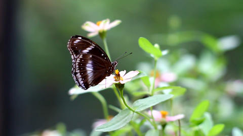 Butterfly Resting On Pink Flower Footage