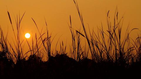 Golden hour sunrise Stock Video Footage
