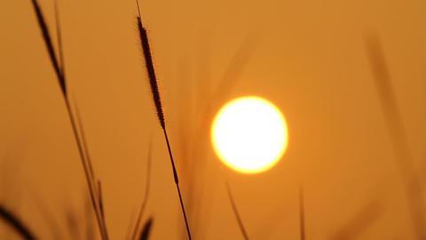 Golden hour sunrise Footage