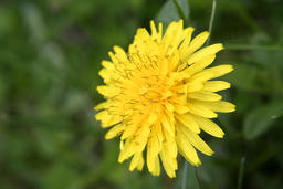 Blur image of a yellow flower Foto