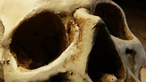 Human Skull Analysis Footage