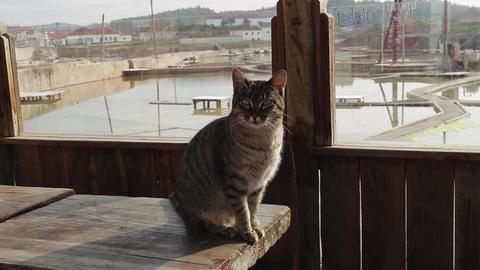 Cat sitting on table outside Salt Flats in Salinas de Rio Maior Portugal Live Action