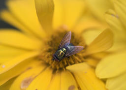 Coloured fly on a yellow flower 사진