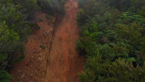 Rising along the slope of the mountain at cloud level. Red clay soil and rich Live Action