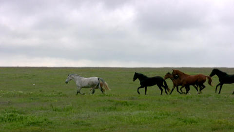Herd and steppe. Evening Stock Video Footage