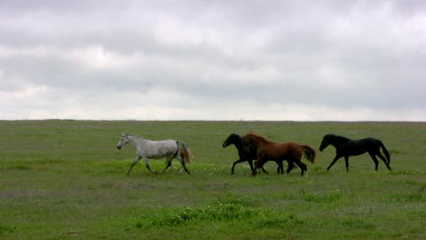 Herd and steppe. Evening Footage