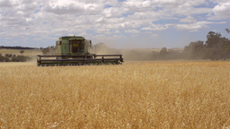 Header Harvesting an Oats Crop Footage
