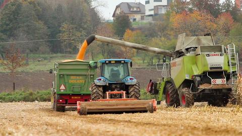 Corn harvest Stock Video Footage