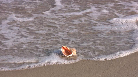 Seashell Footage