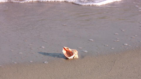Seashell Stock Video Footage