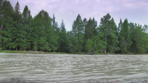 River in the forest Stock Video Footage