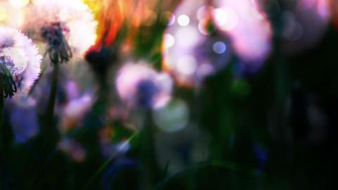 Flower 7974 Stock Video Footage