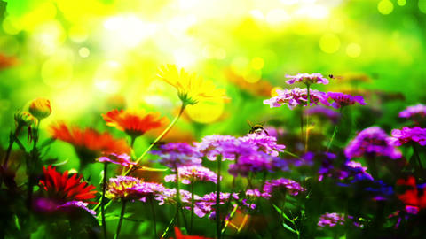 Flower 25156 Stock Video Footage