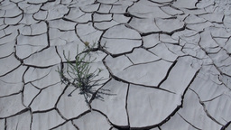 Drought Stock Video Footage