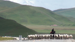 Herd of sheep on Chinese road Stock Video Footage